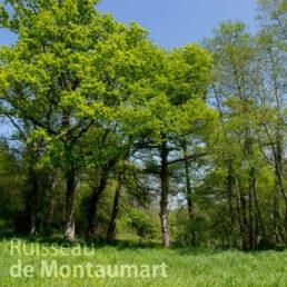 Cover Ruisseau de Montaumart