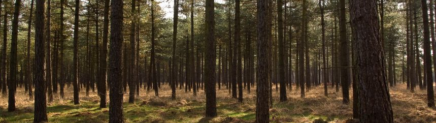 Dit is wat u hoort wanneer u écht naar het ruisen van de bomen luistert