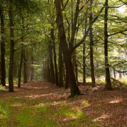 Bos en struikgewassen